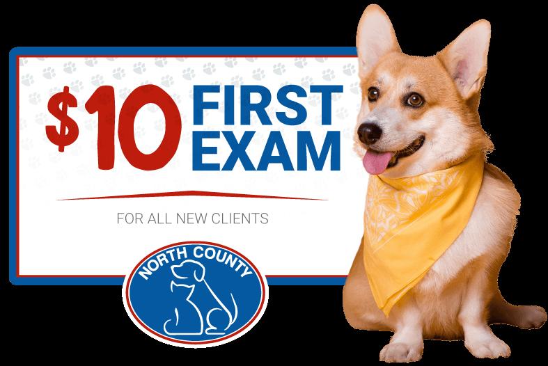 $10 First Exam